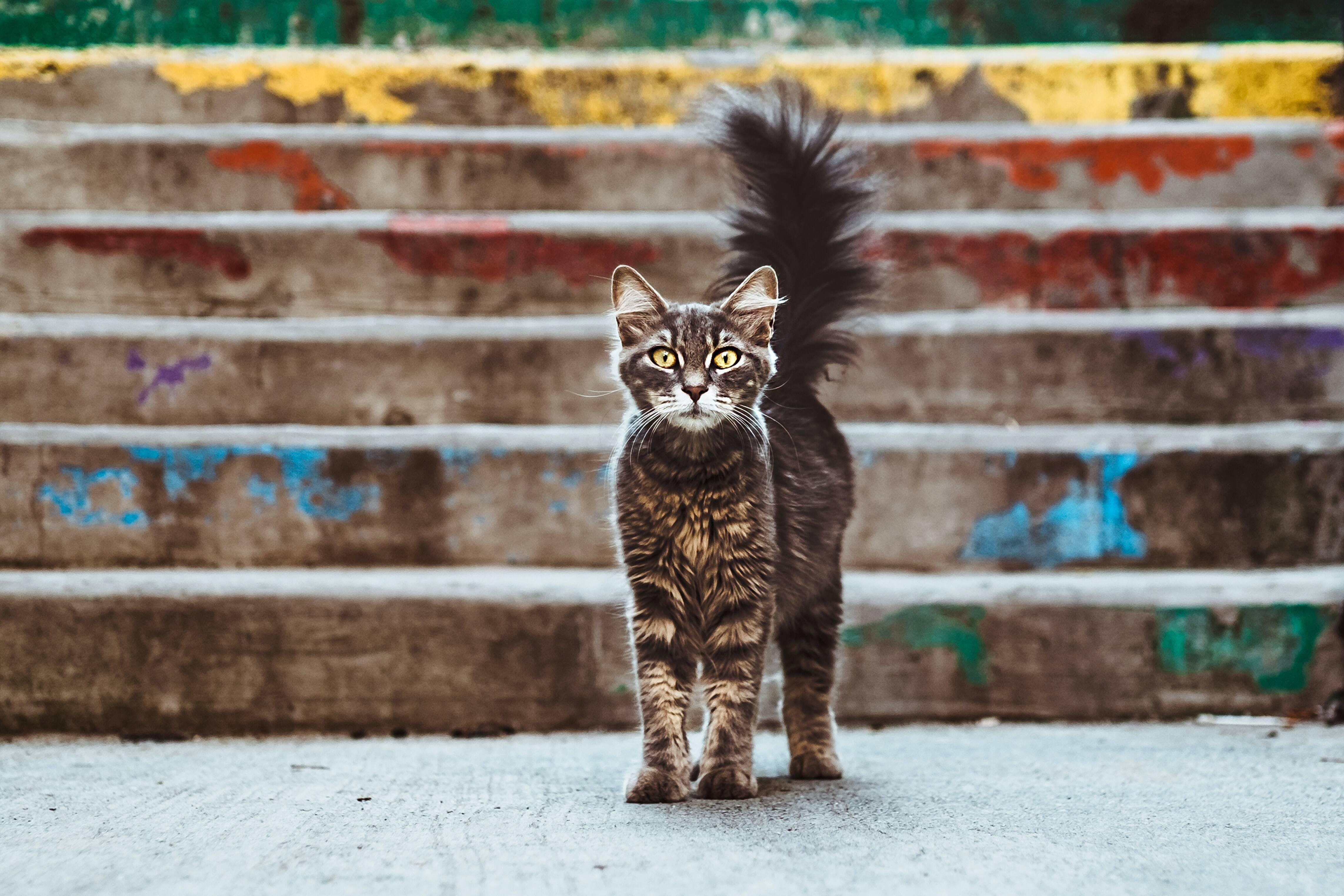 kedi maması alırken nelere dikkat etmelisiniz